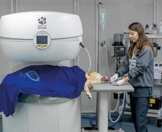 Estudiante con un perro en el resonador, aplicando anestesia