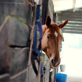 Foto caballo en las caballerizas del Centro de Veterinaria y Zootecnia - CVZ