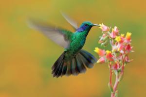 Fotografía de colibrí, sobre el evento libro de historias