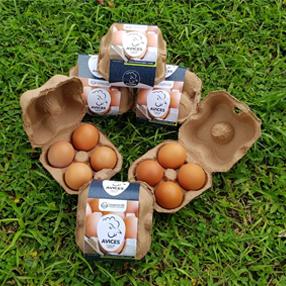 Fotografía de los huevos Avices