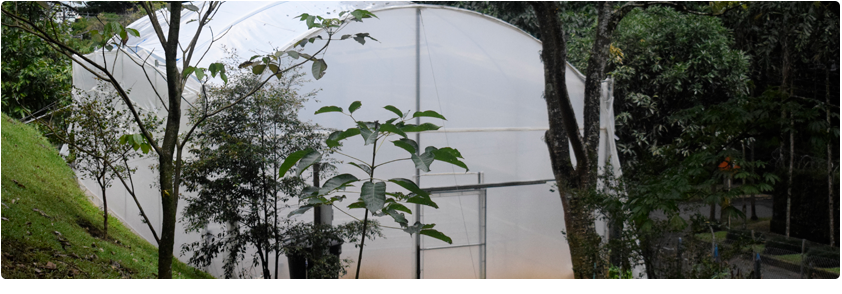 Photograph of the CES University greenhouse