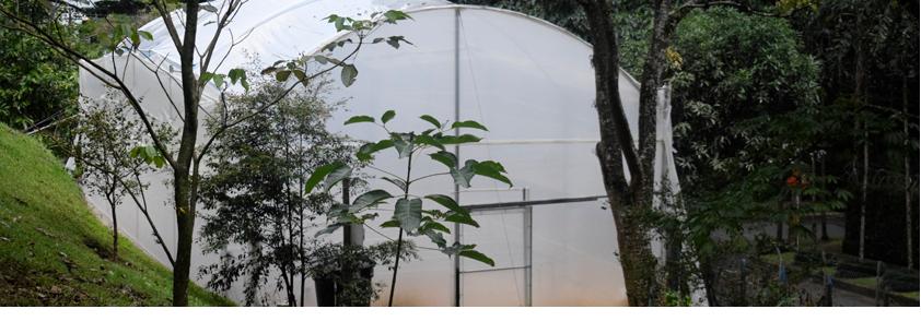 Fotografía del invernadero de la Universidad CES