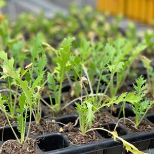 Plantas sembradas en el invernader