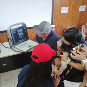 Veterinarians from CES University in Jericó