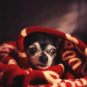 perrito refugiado en una cobija