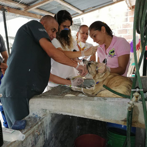 Foto de Médicos veterinarios CES, ayudando animales callejeros en magdalena medio