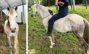 Foto de caballos hurtados del CVZ