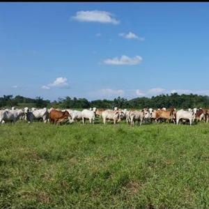 Fotografía de Finca con vacas