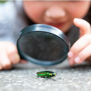 Fotografía de niño viendo un insecto con una lupa