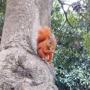 Fotografía de ardilla en un árbol de la universidad CES