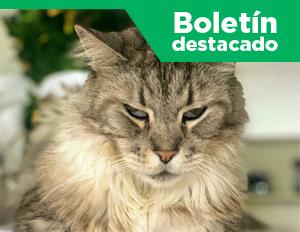 imagen boletín destacado Romeo, el primer gato con marcapasos en Colombia