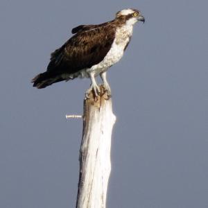 Fotografía: Aves migratorias