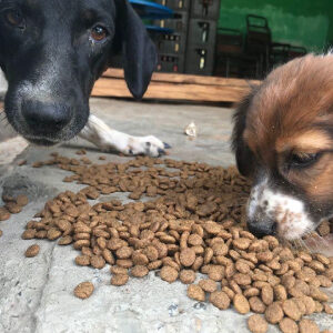 Two dogs eating canine food