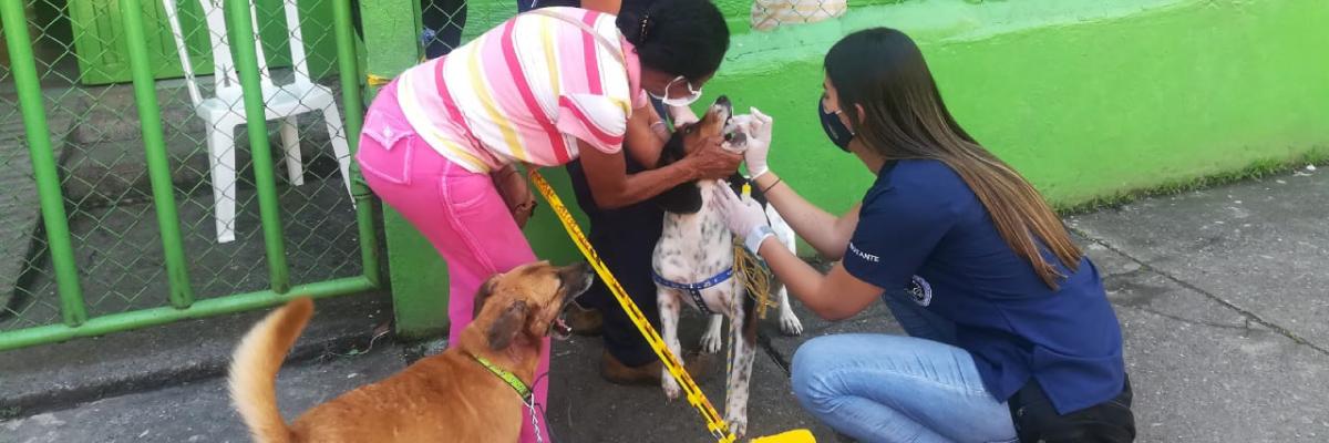 Veterinaria atendiendo a un perro
