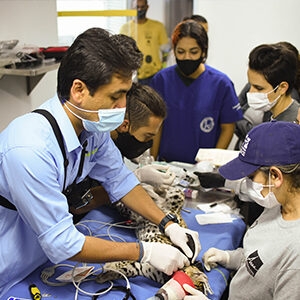 feline being treated by a team of veterinarians