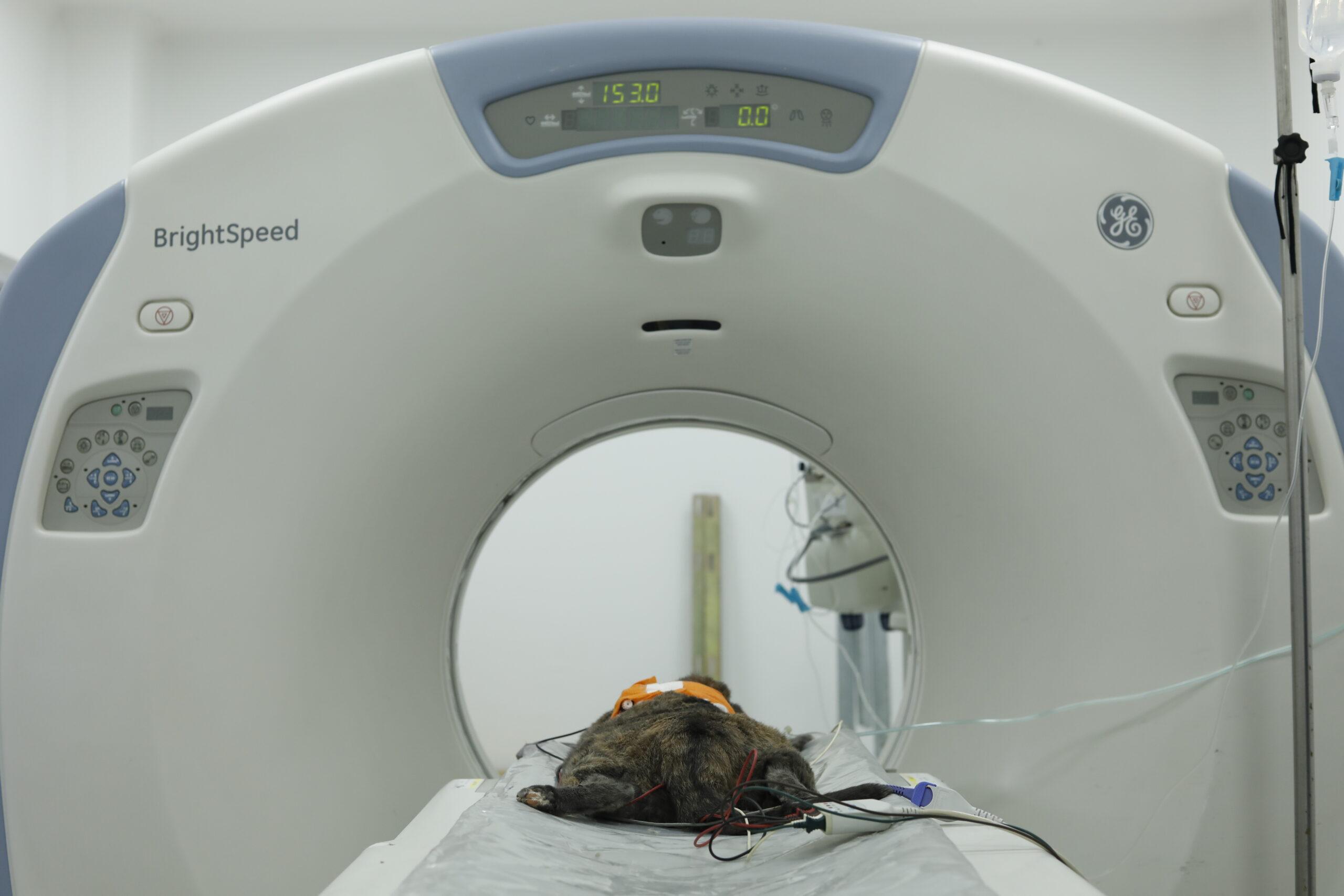 tomograph image with an animal